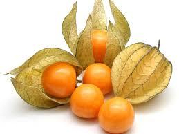 orange fruit names. Plain Names Physalis Fruit Pictures Inside Orange Names I