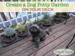 dog potty garden future expat
