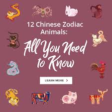 They have a decent, noble and elegant manner. Chinese Zodiac Rabbit 2021 Horoscope Personality Year Of The Rabbit Include 2023 2011 1999 1987 1975 1963