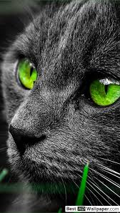 black cat with green eyes hd wallpaper