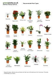 best office plants no sunlight. Beautiful Small Office Plants Common Desktop Best No Sunlight