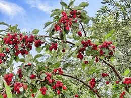 Fruit Trees Bushes And Vines For Natural Growing In The Ozarks Best Fruit Trees For Deer