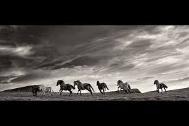 running horses black and white. Exellent White George Karbus Photography  Running Horses Ireland On Horses Black And White B