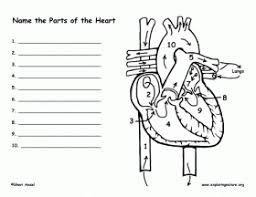 Small Picture Human Heart Coloring Pages Printable Coloring Coloring Pages
