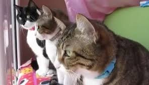 Watch These Cats Carry On the Best Conversation