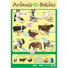 Animals And Their Babies Learning Chart