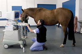 running s equine veterinary services provides a range of services to keep horses happy