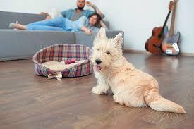 a dog on a hardwood floor near his dog bed
