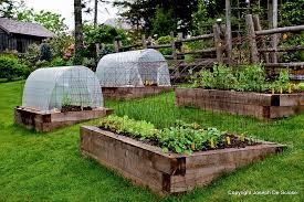 best plants for raised bed vegetable garden