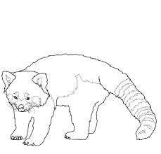 Small Picture Red Panda Coloring Pages chuckbuttcom