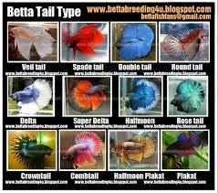 Betta Fish Chart All About Betta Fish Types Of Betta Fish Akvarium Betta