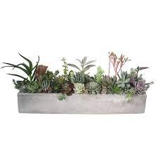 large cement planters. Succulent In A Concrete Grey Rectangular Large Cement Planter Small . Planters S