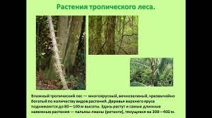 презентация на тему животные и растения тропических лесов класс  презентация на тему животные и растения тропических лесов 2 класс