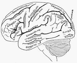 human brain essay filmography example essay sample resume of system administrator similar articles acircmiddot human brain