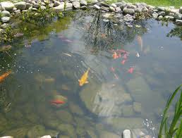 Pond Is A Pond Right For Your Garden The Skip Company