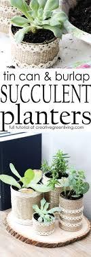 Best 25+ Succulent display ideas on Pinterest | Succulent planters, Indoor  succulents and Plants indoor