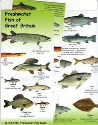 Freshwater Fish Chart Freshwater Fish Of Great Britain By Anning An Illustrated Fold Out Guide To The Coastal Fishes Of Britain From The Calypso Online Fish Bookshop