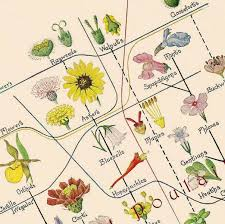 Edith Clements Flower Chart 1918 Edwardian Antique Botanical Lithograph