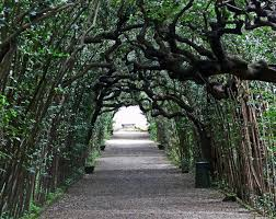 Boboli is an obvious choice for the best Florentine garden, and yet there  is nothing obvious about it. Hidden behind the forbidding bulk of Palazzo  Pitti, ...