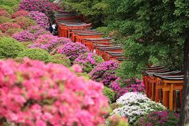 「京都 根津神社 地図」の画像検索結果