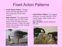 Fixed Action Pattern Definition