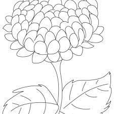 Tổng hợp các bức tranh tô màu hoa cúc ý nghĩa nhất dành tặng cho bé
