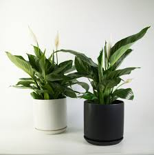 Plant and Pot NZ | Modern Indoor Plants | Contemporary Planters