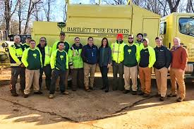 tree service and shrub care in central connecticut and western massachusetts
