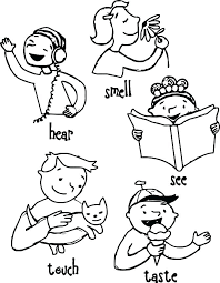 5 Senses Coloring Page Five Senses Coloring Pages 5 Senses Coloring