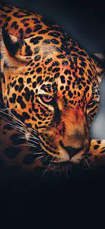Black Jaguar Wallpaper Cave