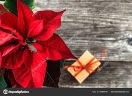 Roten Weihnachtsstern Weihnachten Blume Tischdekoration Mit