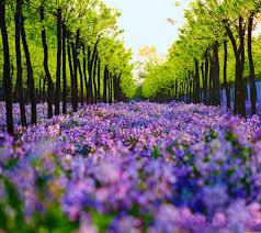 Natural Screen Wallpapers - Top Free ...