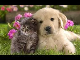 hd pictures of cute animals. Perfect Pictures Cute Animals Are Friends  Animal Friendships Compilation 2015 NEW HD  VIDEO Throughout Hd Pictures Of L