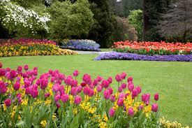 color garden. Color Garden Photo - 3 E