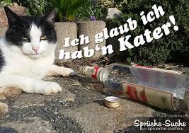 Lustige Sprüche Katze Hat Kater Sprüche Suche