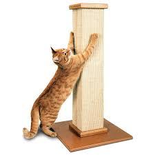Cats Scratching Furniture