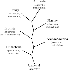 Microbes And The World Boundless Microbiology