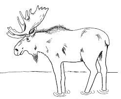 Small Picture Moose coloring page 2 Free Printable Coloring Pages