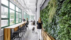 office greenery. Amazon Is One Of Many Companies Jumping On This Greenery-over-cubicles Movement Office Greenery L