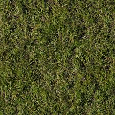 grass texture hd. Seamless Grass Texture Hd