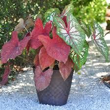 11 easy colorful container garden ideas