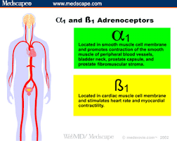 Adrenergic Receptors Chart Part I The Physiology And Function Of The Alpha Adrenergic