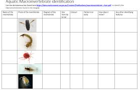 Invertebrate Identification Chart Water Bug Classification Stem Lyndale Secondary College