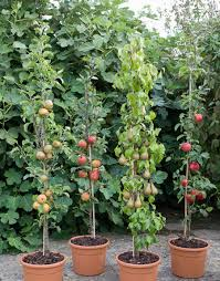 How To Grow Fruit Trees In Containers  Moms Need To Know ™When Do You Plant Fruit Trees