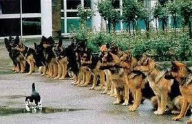 Afbeeldingsresultaat voor sociaal gedrag voor honden