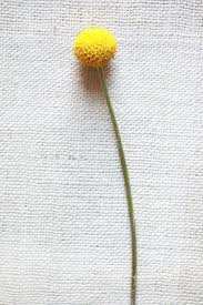 find this pin and more on flower names reference