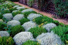 Small Picture Waterwise Garden Checkerboard planting of green and silver