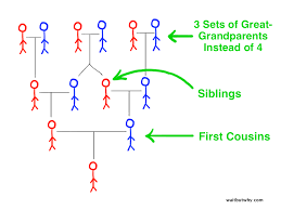 pedigree tree your family past present and future wait but why