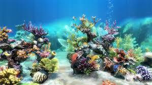 50 Best Aquarium Backgrounds Free Premium Templates