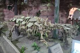 Zhongyuansaurus - Wikipedia